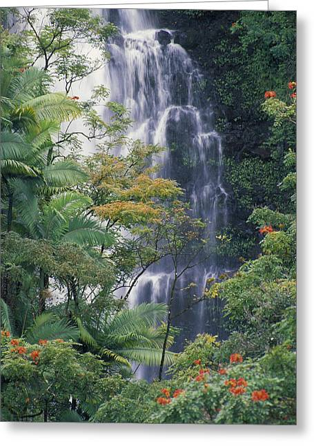 Hamakua Greeting Cards - Big Island Waterfall Greeting Card by Ron Dahlquist - Printscapes