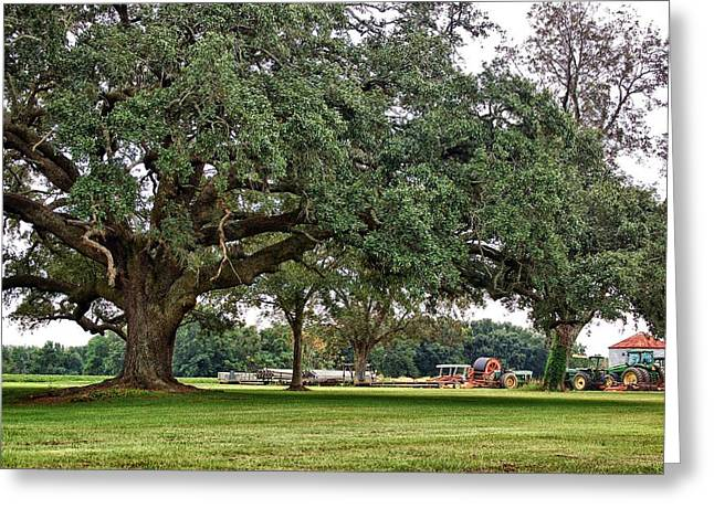 Big Oak And The Tractors Greeting Card by Michael Thomas