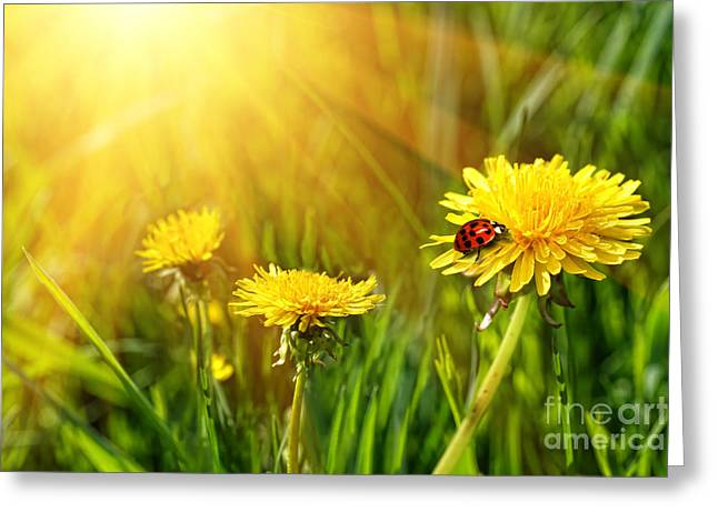 Rural Scenery Greeting Cards - Big yellow dandelions in the tall grass Greeting Card by Sandra Cunningham