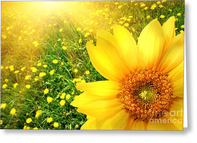 Pollen Greeting Cards - Big yellow sunflower  Greeting Card by Sandra Cunningham