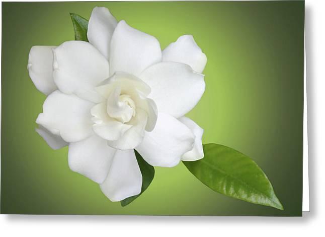 Gardenias Greeting Cards - Billies Flower Greeting Card by Kristin Elmquist