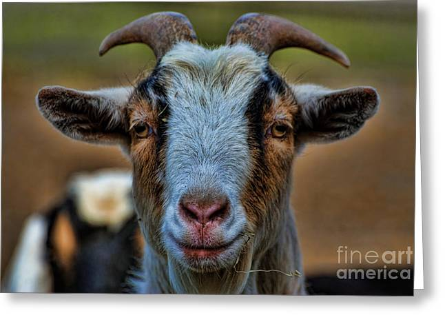 Billy Goat Greeting Card by Paul Ward