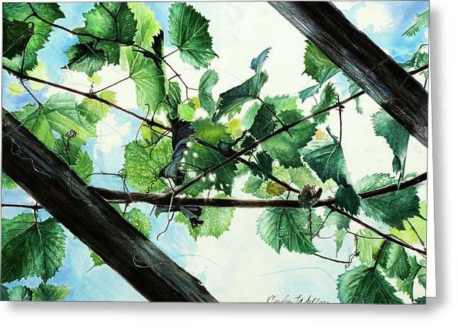 Interlaced Greeting Cards - Biltmore Grapevines Overhead Greeting Card by Carolyn Coffey Wallace