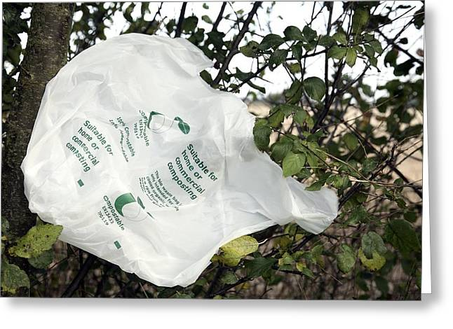Carrier Greeting Cards - Biodegradable Carrier Bag Greeting Card by Victor De Schwanberg