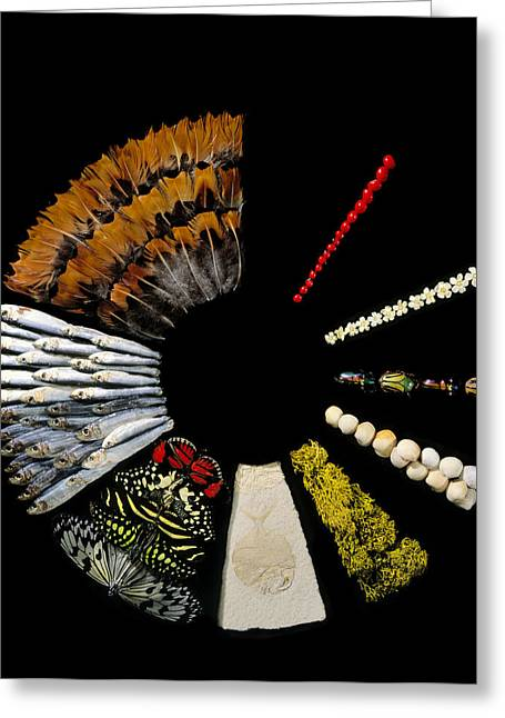 Fossilized Shell Greeting Cards - Biological Collection Greeting Card by Diccon Alexander