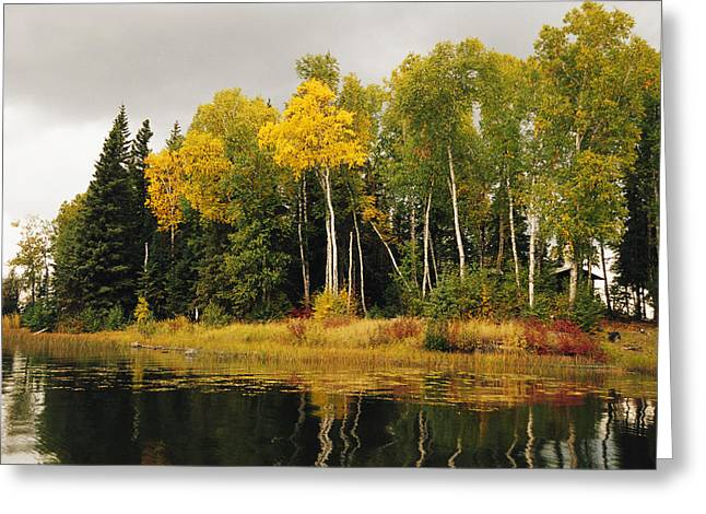 Park Scene Greeting Cards - Birch And Pine Trees Along A Lake Greeting Card by Raymond Gehman