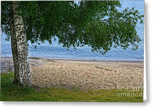 Birch At Beach Greeting Card by Lutz Baar