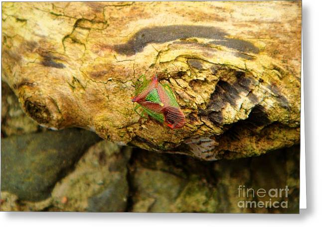 Birch Shield Bug Greeting Card by Yvonne Johnstone