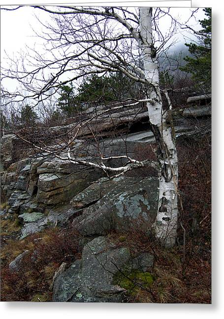 Byway Greeting Cards - Birch Greeting Card by Skip Willits