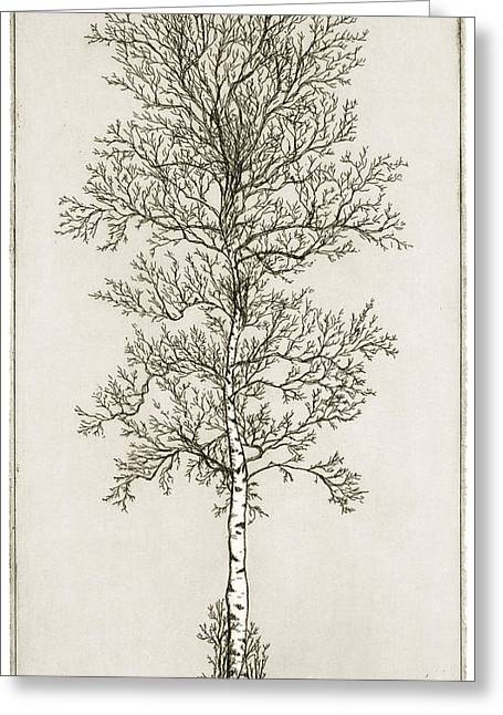 Printmaking Mixed Media Greeting Cards - Birch Tree Greeting Card by Charles Harden