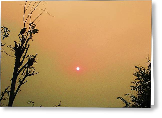 Nature Pyrography Greeting Cards - Bird And Sun Greeting Card by Jayvardhan Kandpal