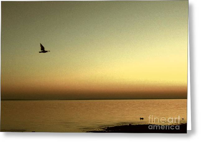 Bird At Sunrise - Sepia Greeting Card by Desiree Paquette