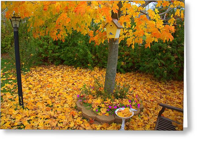Indiana Autumn Greeting Cards - Bird Bath Greeting Card by Ed Smith
