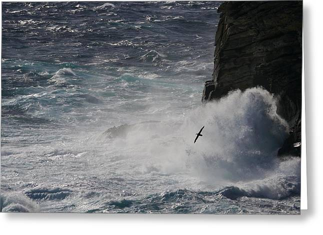 Surf Silhouette Greeting Cards - Bird Flying Above Crashing Surf Greeting Card by Paul Nicklen