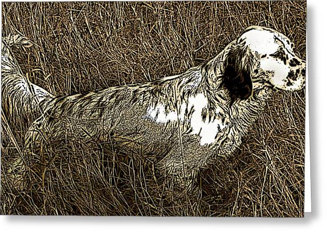 Setter Pointer Greeting Cards - Bird Greeting Card by George Pedro