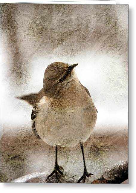 Pics Of Birds Greeting Cards - Bird In A Bag Greeting Card by Skip Willits