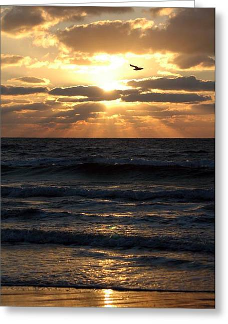 Bird Photography Greeting Cards - Bird in sunset Greeting Card by Evelyn Patrick