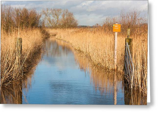 Beek Greeting Cards - Bird Nesting Reserve Greeting Card by Semmick Photo