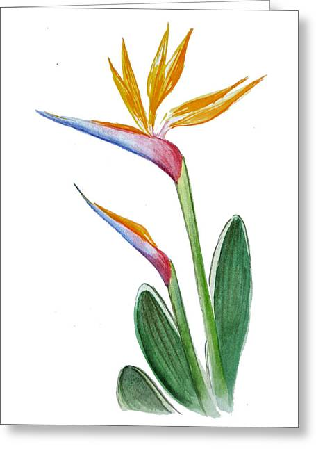 Bird Of Paradise Greeting Cards - Bird of Paradise Card Greeting Card by Irina Sztukowski