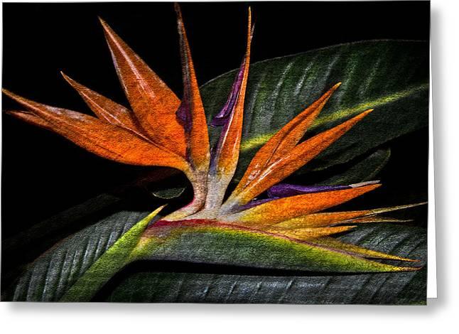 Tropical Bird Print Greeting Cards - Bird Of Paradise Greeting Card by Debra and Dave Vanderlaan