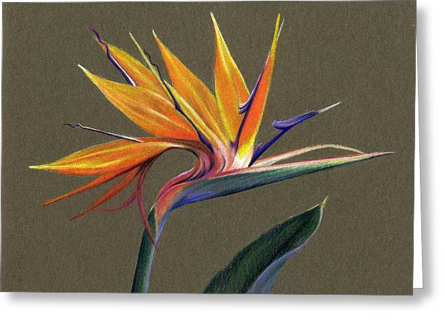 Florida Flowers Drawings Greeting Cards - Bird of Paradise Greeting Card by Heather Mitchell
