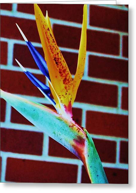 Bird Of Paradise Greeting Card by Todd Sherlock