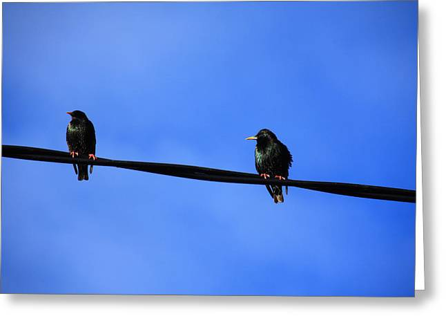 Yellow Beak Greeting Cards - Bird On A Wire Greeting Card by Aidan Moran