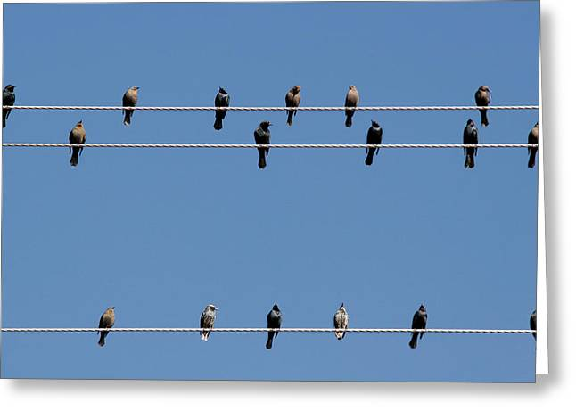Sitting Greeting Cards - Bird on a Wire Greeting Card by Christine Till