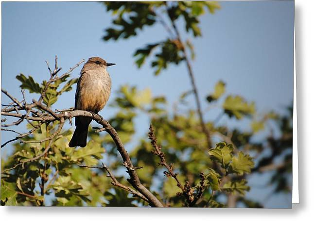 bird on branch Greeting Card by Chase Hall