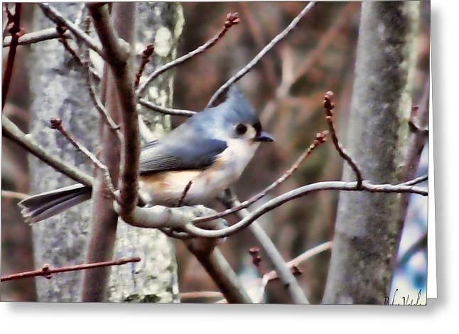 Bird On The Ground Greeting Cards - Bird Photography Greeting Card by Debra     Vatalaro