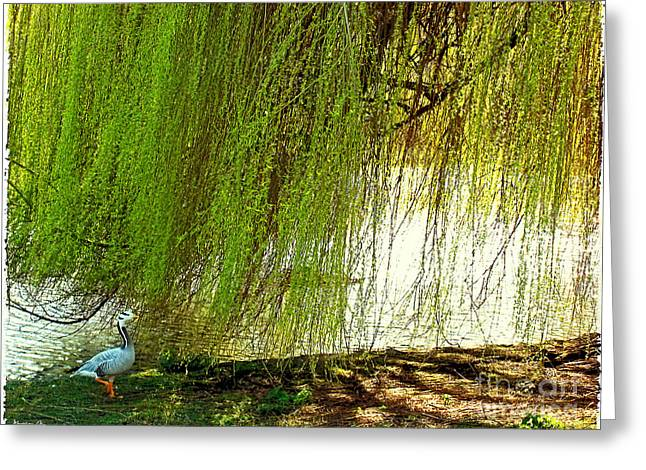 Weeping Greeting Cards - Bird Under Weeping Willow Greeting Card by Madeline Ellis