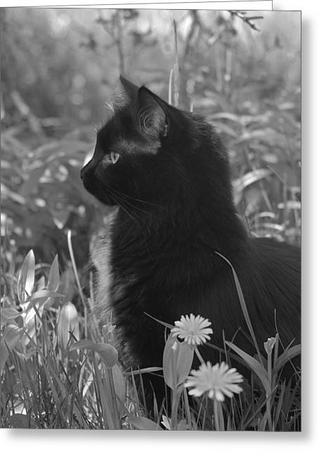 Cat Companions Greeting Cards - Bird Watching Greeting Card by Karon Melillo DeVega