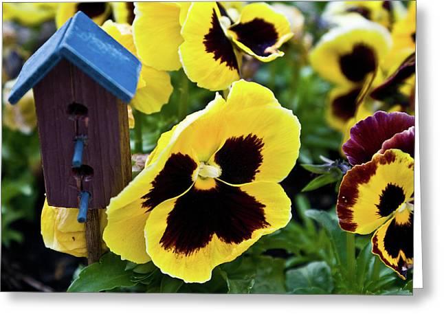 Festivities Greeting Cards - Birdhouse and Panseys Greeting Card by Douglas Barnett