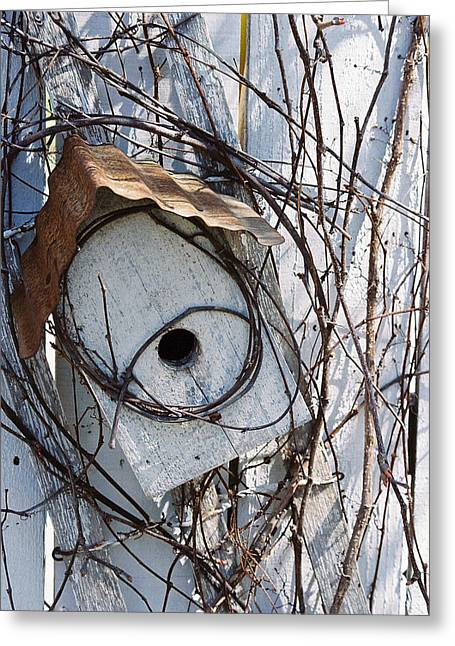 Tin Roof Greeting Cards - Birdhouse Brambles Greeting Card by Lauri Novak