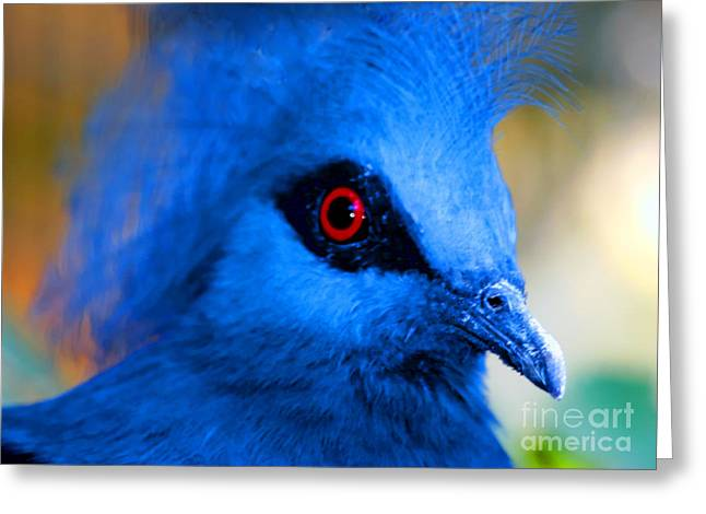 Bird's Eye View Greeting Card by Tap  On Photo