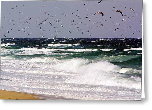 Swarm Greeting Cards - Birds feeding frenzy Greeting Card by Matt Suess
