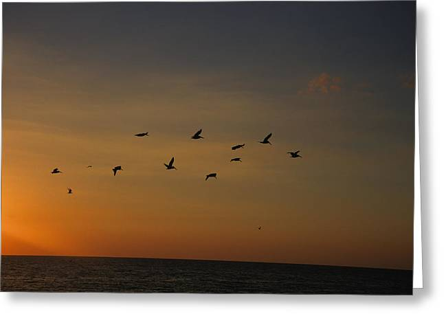 Seagull Flying Greeting Cards - Birds Fly Into The Wind Above The Gulf Greeting Card by Stacy Gold