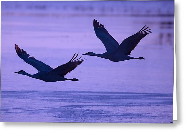 In The Corner Greeting Cards - Birds Fly Low Over Water Greeting Card by Ralph Lee Hopkins