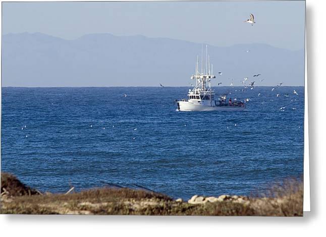 Emma Greeting Cards - Birds Flying Over A Commercial Fishing Greeting Card by Rich Reid