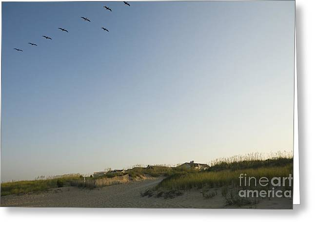 Sea Birds Greeting Cards - Birds Flying Over Beach Greeting Card by Roberto Westbrook