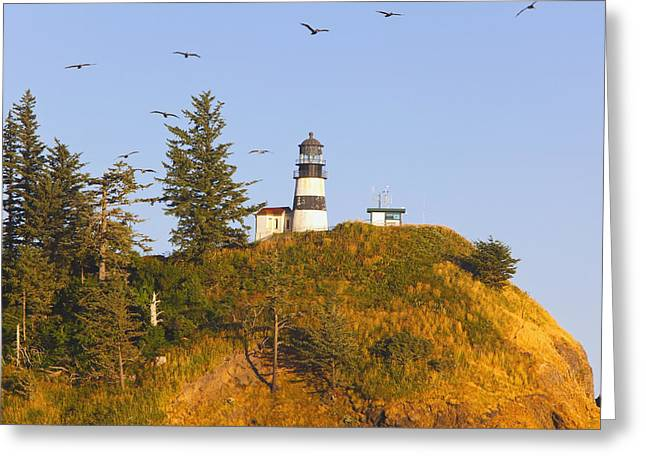 Birds In Flight Over Cape Greeting Card by Craig Tuttle