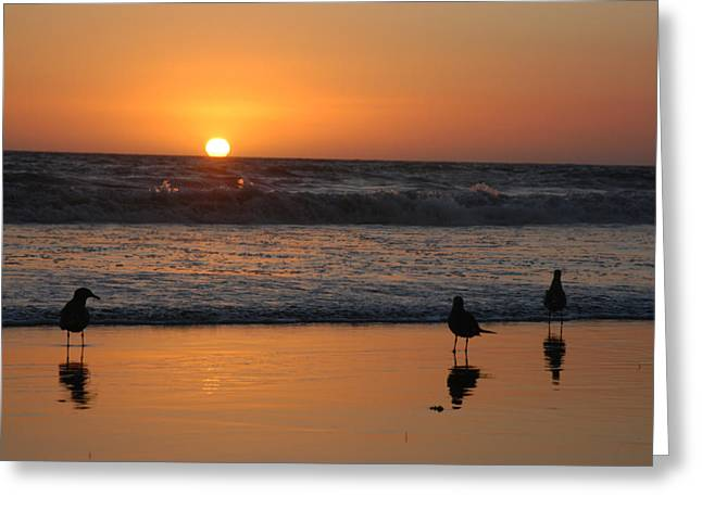Anna Maria Island Greeting Cards - Birds In The Sunset Light Greeting Card by Stacy Gold
