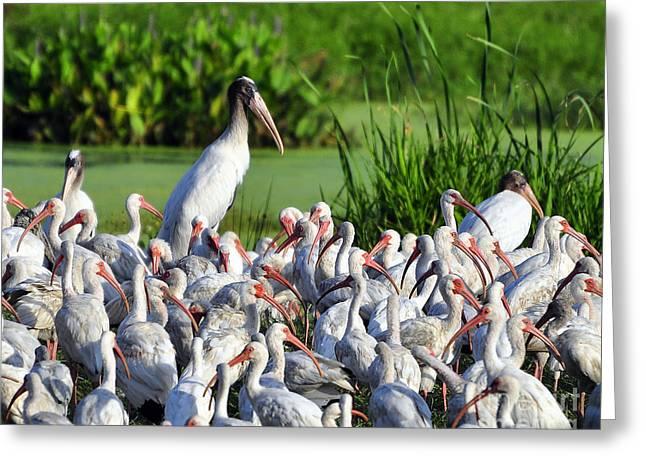 Al Powell Photography Usa Greeting Cards - Birds of a Feather Greeting Card by Al Powell Photography USA