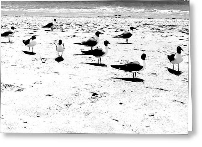 Seagulls On The Sand Greeting Cards - Birds of a Feather Greeting Card by Kathleen Horner