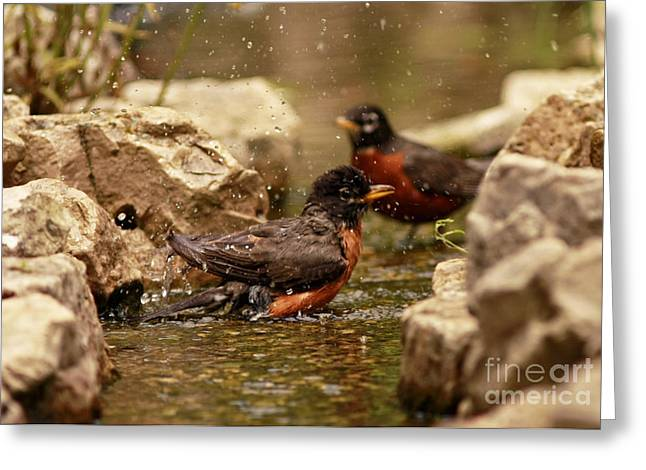Stream Sculptures Greeting Cards - Birds of a Feather Swim Together Greeting Card by Inspired Nature Photography By Shelley Myke