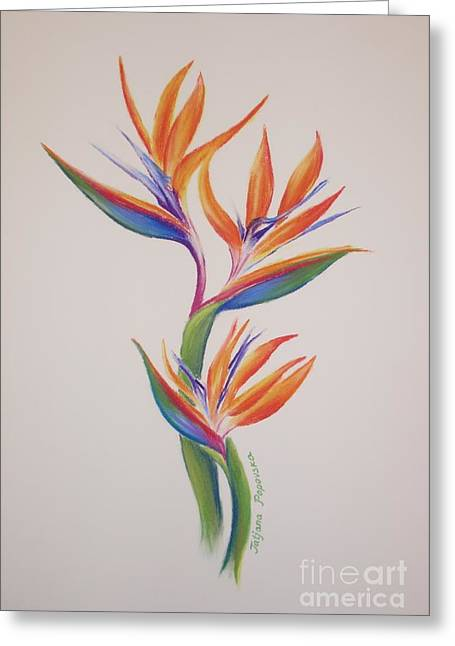 Most Viewed Drawings Greeting Cards - Birds of paradise I Greeting Card by Tatjana Popovska