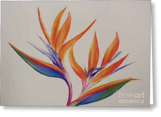Most Viewed Drawings Greeting Cards - Birds of paradise II Greeting Card by Tatjana Popovska
