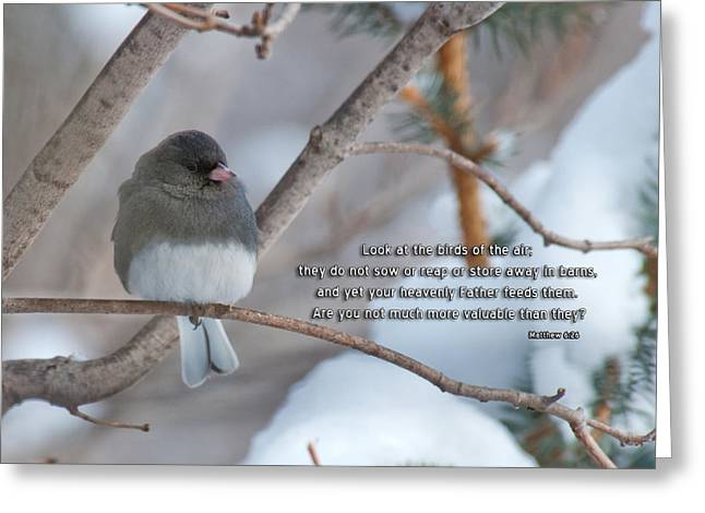 Valuable Photographs Greeting Cards - Birds of the Air Greeting Card by David Arment