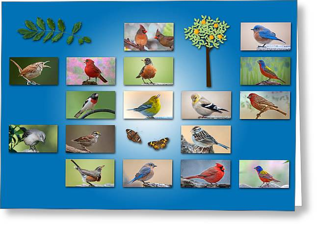Bluebird Posters Greeting Cards - Birds of the Neighborhood Greeting Card by Bonnie Barry