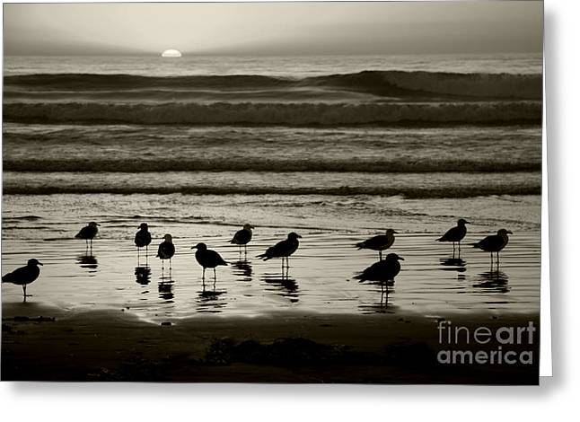 Beach Sunsets Greeting Cards - Birds on a Beach Greeting Card by Timothy Johnson